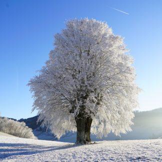 Pomoce o tematyce zimowej